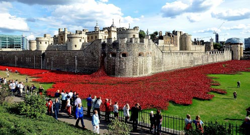 Poppies of London
