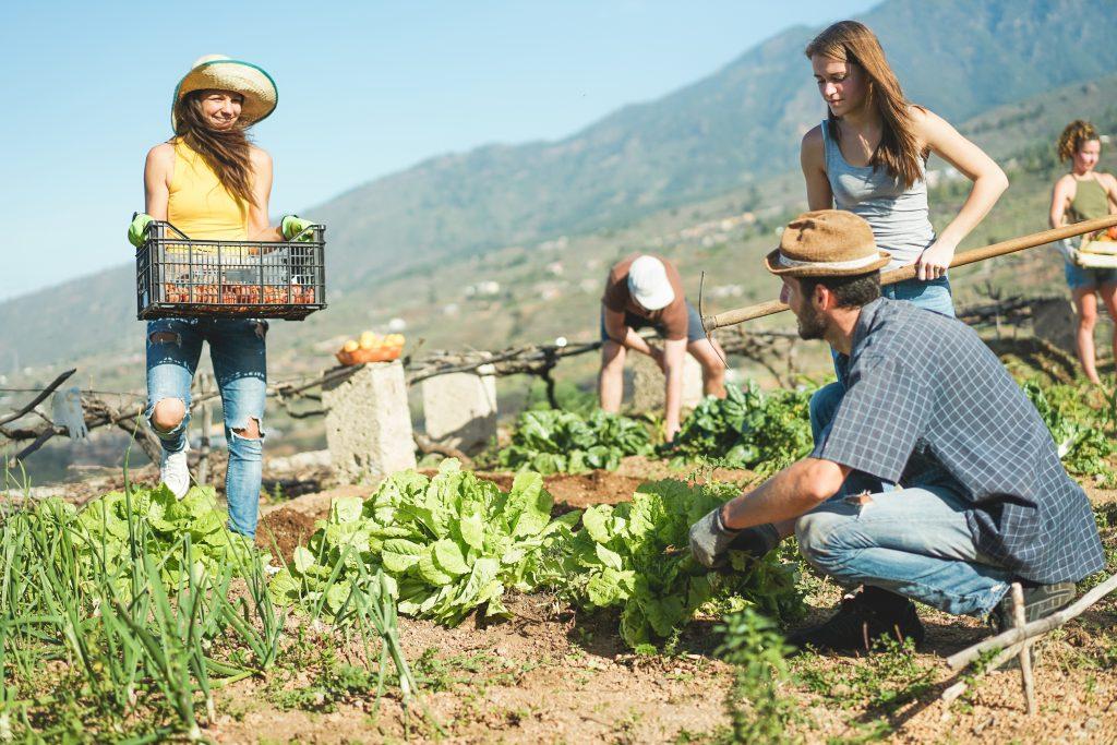 Harvesting Farm Experiential Travel